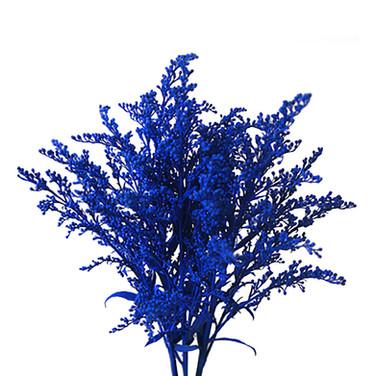 Solidago Airbrushed Dark Blue