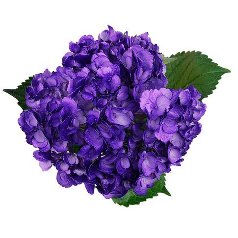 Hydrangea Metallic Purple