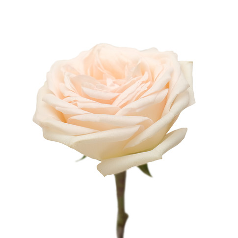 Mayra's White