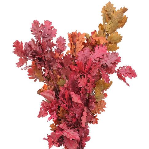 Italian Oak Autumn