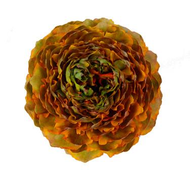 Ranunculus Pom Pom Merlino