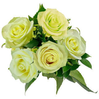 Lime Rose Bunch Natural