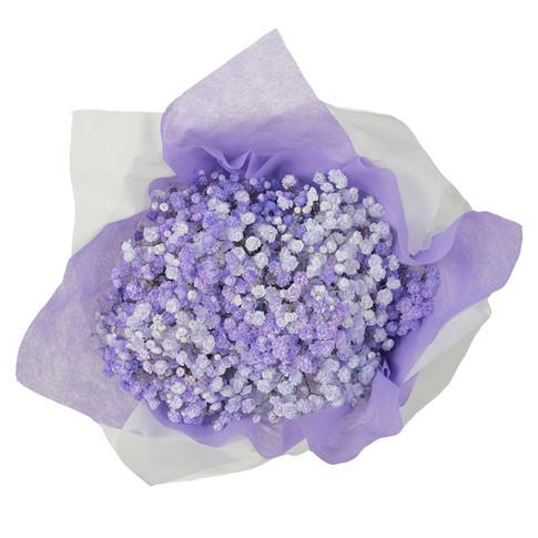 Rainbow Purple/Lavender