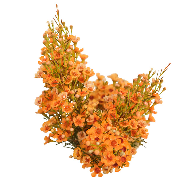 Candy Corn Orange