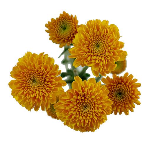 Button Yellow Zinta