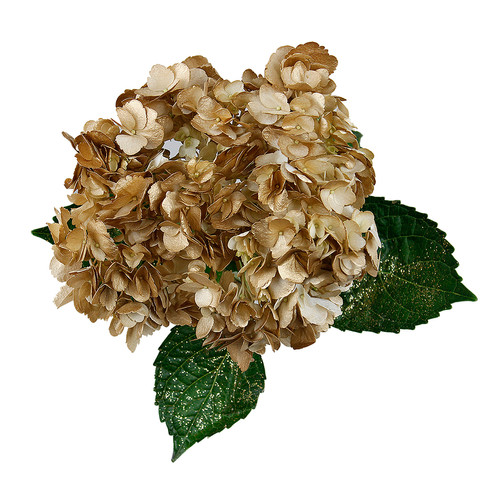 Hydrangea Novelty Golden Glitter
