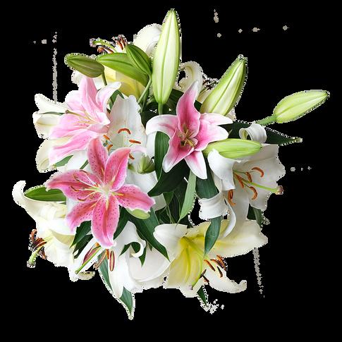 Premium Oriental Lilies