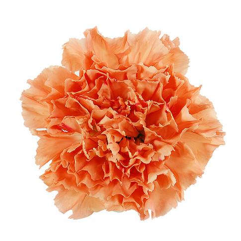 Hermes Orange