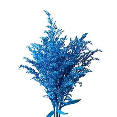 Solidago Airbrushed Light Blue