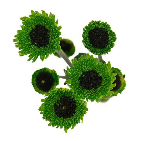 Novelty Green Peridot