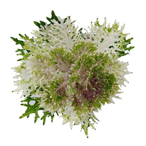 Kale White