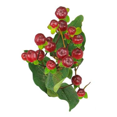 Magical Cherry