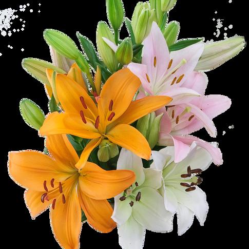 Premium L.A. Lilies