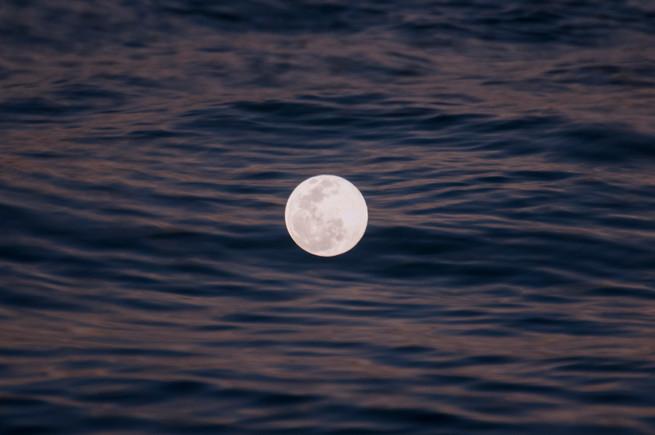 Luna oceanica