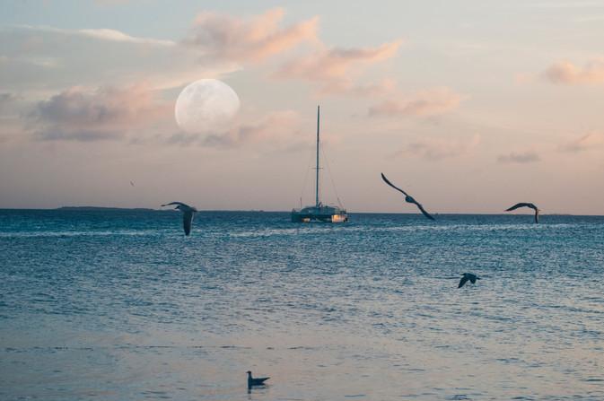 Luna libre