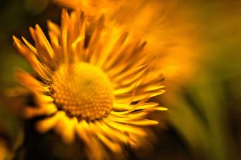 flowers-4159576_1920.jpg