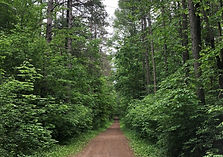 Xtra_large_Forest with pathway.jpg