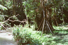 Walking Tree
