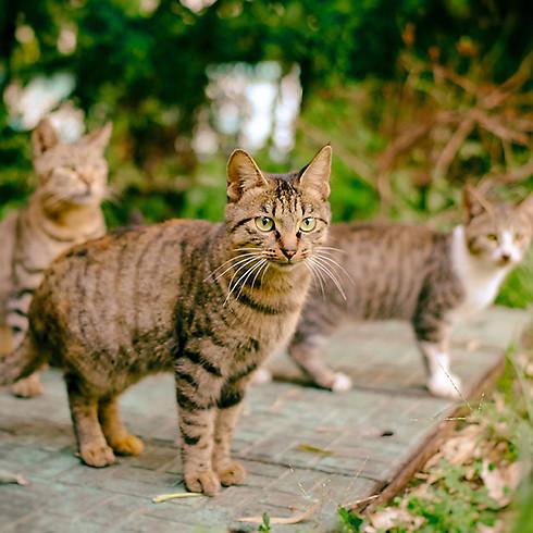 Campagne de capture de chats