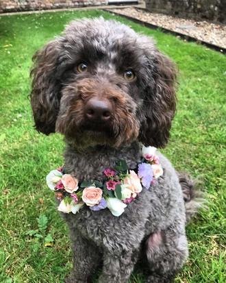 This weeks Bride has included her dog in