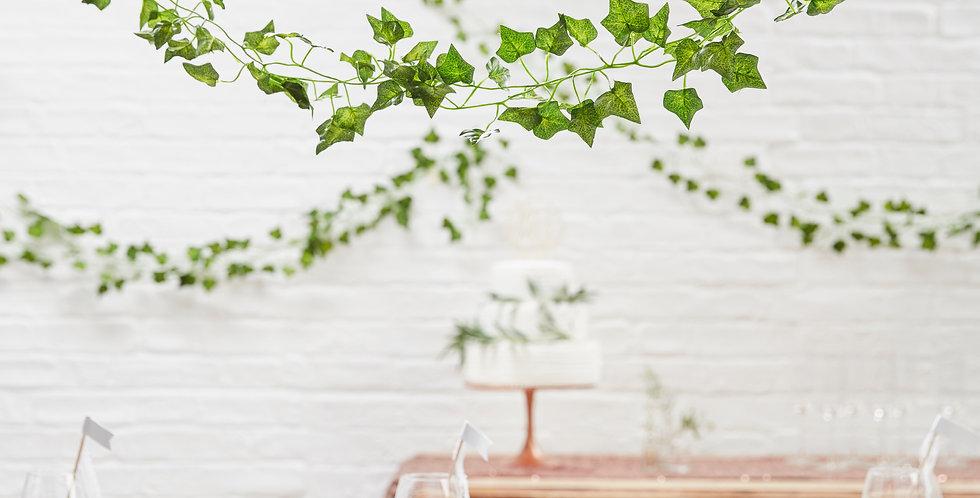 Decorative Vines - Beautiful Botanics