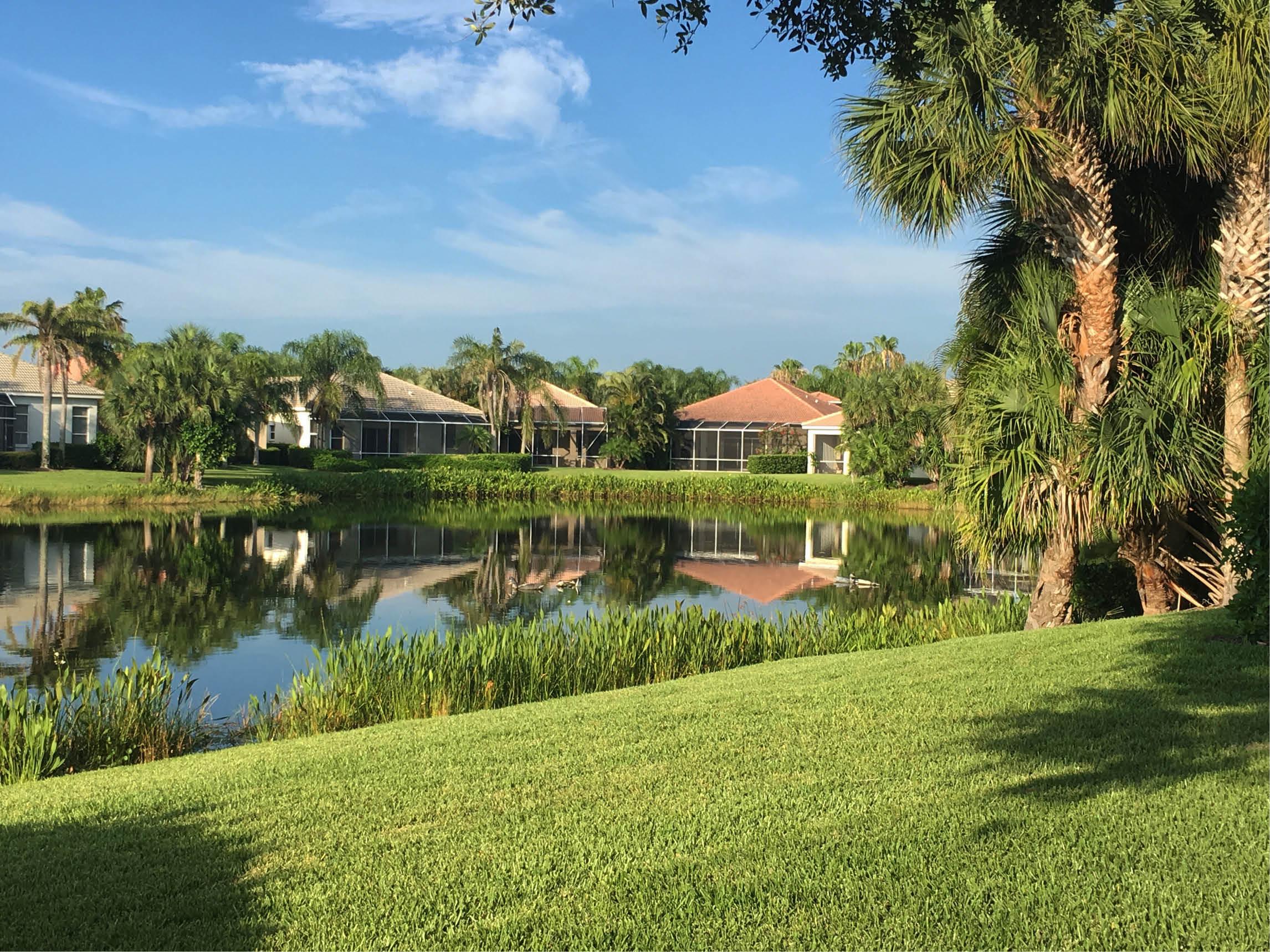 A neighborhood pond