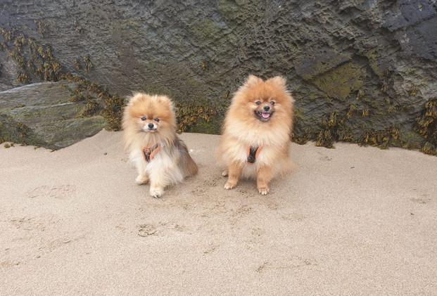 Dog Friendly West Wales
