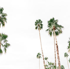 haute-stock-photography-palm-springs-col