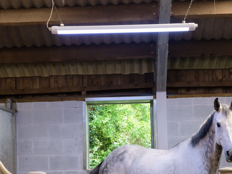 See the light with a proven, proactive way to keep your horses in good health