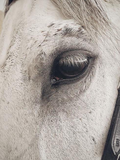 Horses eye.jpg
