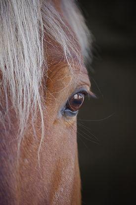 palamino eye.jpg