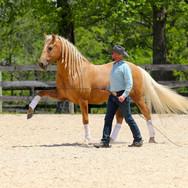 Double Dan Horsemanship, Lexington, KY