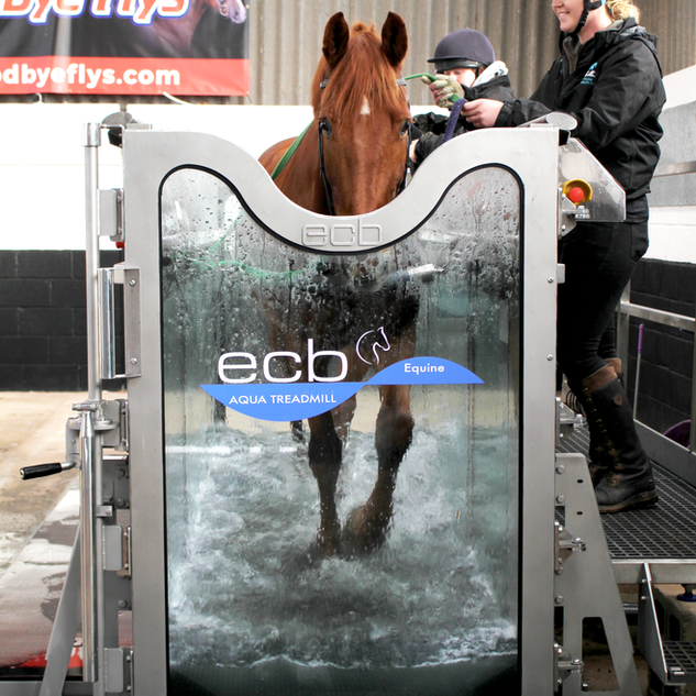 Treadmill used Brown horse.png