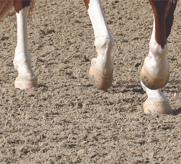 CLOPF & Legs.jpg