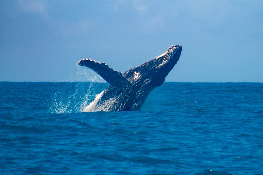 baleia em guarapari.jpg