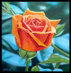 """""""Orange Rose"""""""