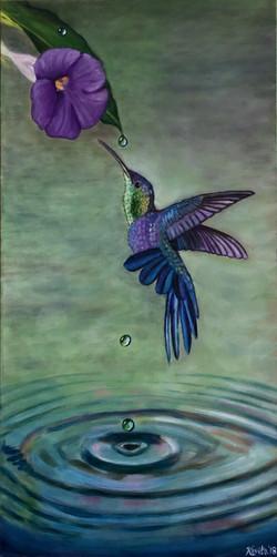 """The Mystery of Hummingbirds"""