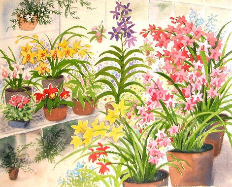 orchid%20greenhouse_edited.jpg
