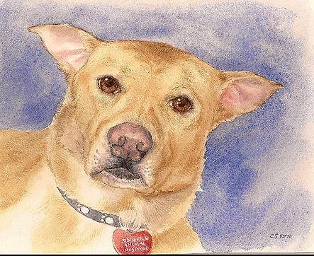 dog portrait-stacy-web.jpg