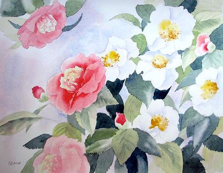 camellias soc 6.jpg