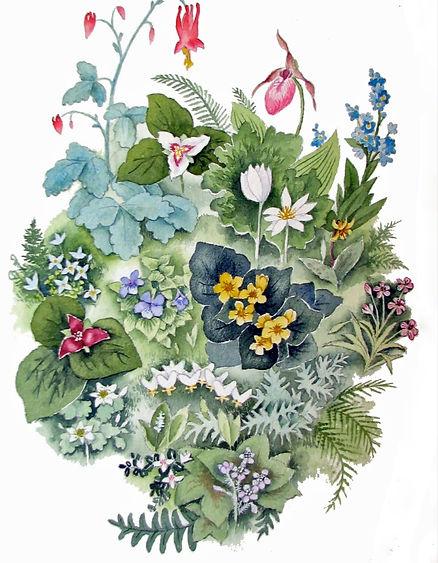spring%20wildflowers_edited.jpg