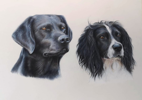 Lab and Spaniel coloured pencil