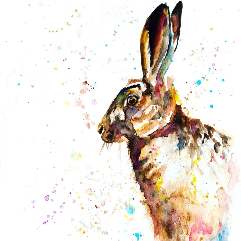 Hare in colour
