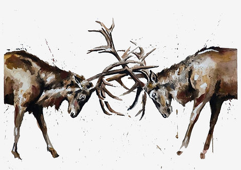 Head to Head - Stag Print