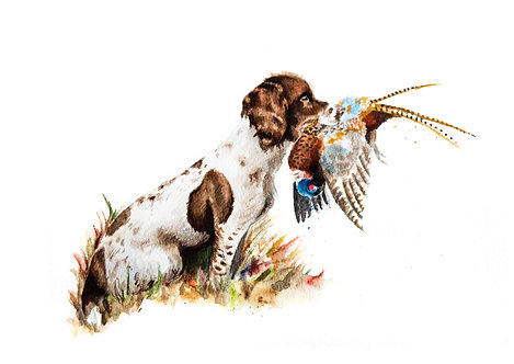 Springer Spaniel and a Pheasant
