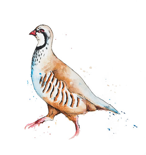 The Plucky Partridge