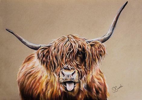 Hamish the Highland