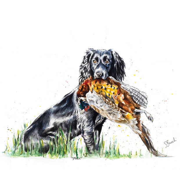 Teal the Cocker with Pheasant
