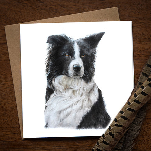 Border Collie Card - pack of 10