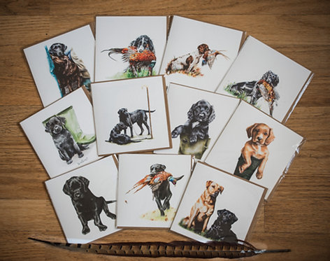 The Big Gundog Collection Mix - Pack of 11
